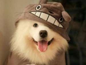 什么是狗狗的尴尬期?狗狗从什么时候开始这一时期呢?